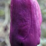 magnoliga vulcan 2_20_14 no.7193n94